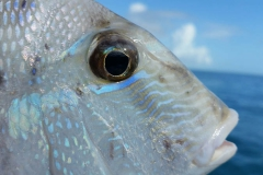 Up-Close-with-Key-West-Fishing